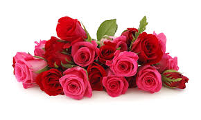 Meaning Of Pink Roses Flowers - the meaning of the dream in which you saw flowers