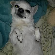 Squinty Eyes Meme - squinty eyes dog meme clearview windows