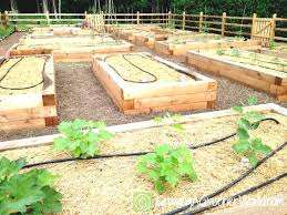 Garden Bed Layout Raised Bed Vegetable Garden Plans New Raised Bed Garden Layout