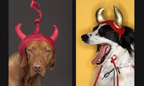 Expensive Halloween Costumes 10 Outrageously Expensive Halloween Costumes Pets Gobankingrates