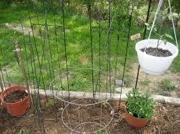 tomato support experiment u2013 jennah u0027s garden