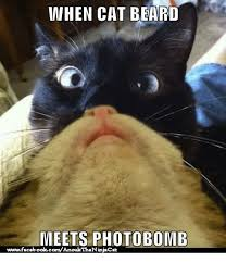 Cat Beard Meme - 25 best memes about cat beards cat beards memes