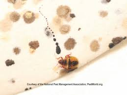 Living With Bed Bugs Where Do Bed Bugs Come From Identify Bed Bugs Info