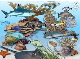 marine ecosystems national geographic society