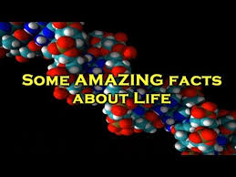 some amazing facts about