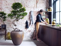a guide to indoor trees the of plants