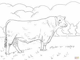 cattle coloring pages free coloring pages highland cow coloring