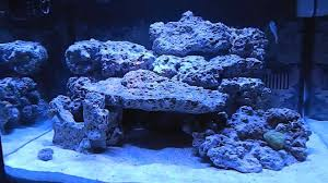 Reef Aquascape Designs Biocube 29 Aquascape And Cycle Youtube