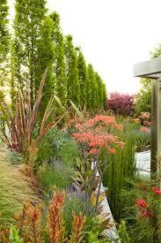 native plant fertiliser 46 best protea family plants we grow images on pinterest native