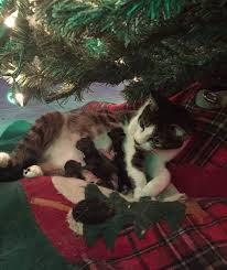 cat delivers kittens right the tree thechive