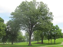 meadowbrook country club golf course maintenance tree inventory