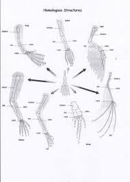 what is darwin u0027s theory of evolution darwin theory theory of