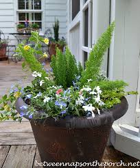 Summer Flowers For Garden - container gardening decorate the deck and patio with flowers for