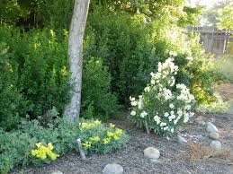 chapter program u2013 alta peak chapter california native plant society
