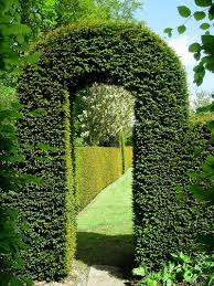 Yew Topiary - shrubs hedges topiary u2013 garden keepers oxfordshire and the