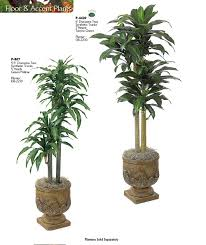 indoor plants with names google search indoor plants