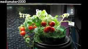 2 liter bottle self watering planter quick u0026 easy diy youtube