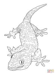 tokay gecko coloring page free printable coloring pages