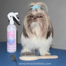 haircuts for shih tzus males shih tzu bows descriptions reviews how to with photos