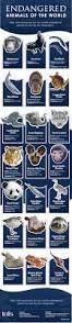 best 25 wildlife conservation ideas on pinterest conservation