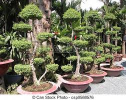 stock image of ornamental plants these plants are taken in a