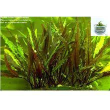 Aquascape Aquarium Plants Aquarium Plants Price Harga In Malaysia