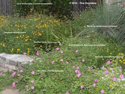 native uk pond plants texas native plants week my gardener says u2026