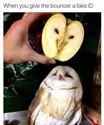 Fbf Meme - owl meme kappit