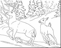 brilliant realistic animal coloring pages with animal color pages