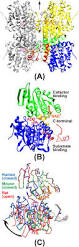 structural insights into the reaction mechanism of s adenosyl l