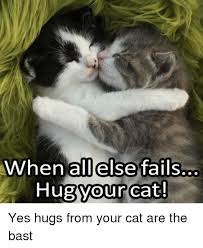 Cat Hug Meme - when all else fails hug your cat yes hugs from your cat are the