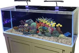 r j enterprises fusion 50 gallon aquarium tank and cabinet fusion series aquariums r j enterprises