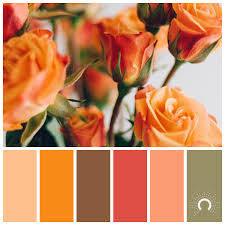 orange and color orange astelle s colors