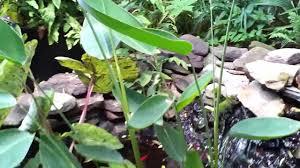 my tropical jungle backyard july 7 2013 youtube