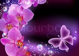 orchid and butterfly stock photo colourbox