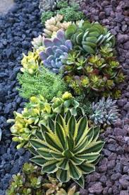the 25 best buy succulents online ideas on pinterest succulents