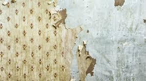 paint or wallpaper paint or wallpaper walls 6085