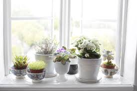 Window Sill Garden Inspiration Window Sill Garden Photos Design Ideas Remodel And Decor Lonny