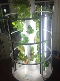 indoor year round growing herbs lettuces kale spinach celery