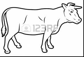 great beef cow coloring page with cow coloring page dokardokarz net