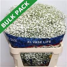 Bulk Baby S Breath Gypsophila Buy Online Wholesale Flowers U0026 Wedding Flowers