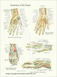 Foot Surface Anatomy Anatomical Charts And Posters