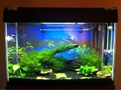 Java Moss Aquascape Cool Thing To Do With Java Moss Aquascape Eden Pinterest
