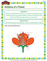 anatomy of a flower u2013 science printable for grade 4