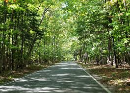 top 10 motorcycle rides in america tunnel of trees road