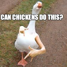 Duck Meme - meme creator swag duck meme generator at memecreator org