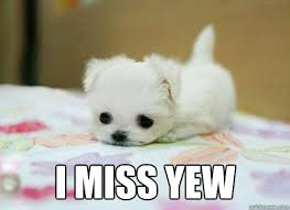 i miss you memes quickmeme