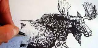 sparrow avenue moose drawing part 2