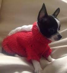 chihuahua sweaters chihuahua clothes fashionable protective