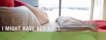 National Bed Bug Registry Nyc Bedbug Treatment M U0026m Pest Control